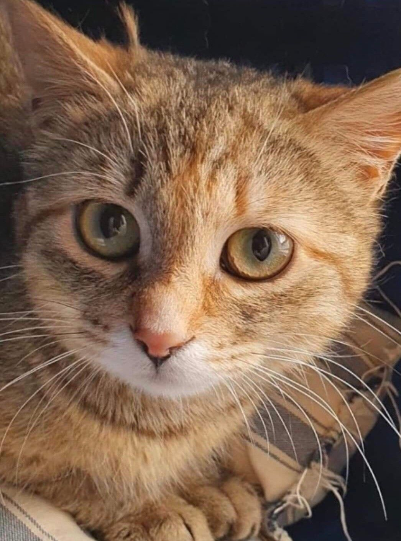 cassandra-cat