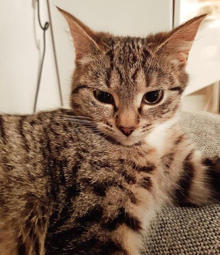 siv-cat