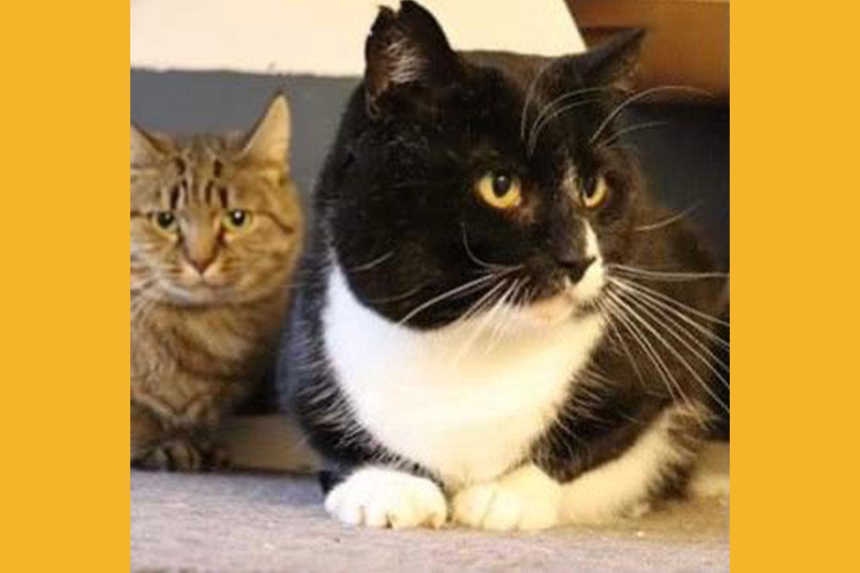 cat-georg-kaja