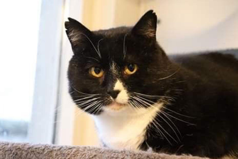 cat-georg