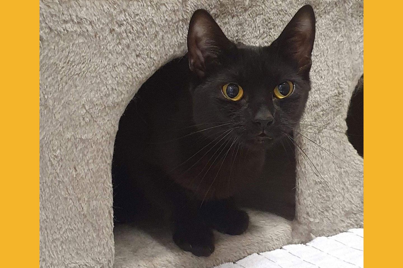 cat-kia