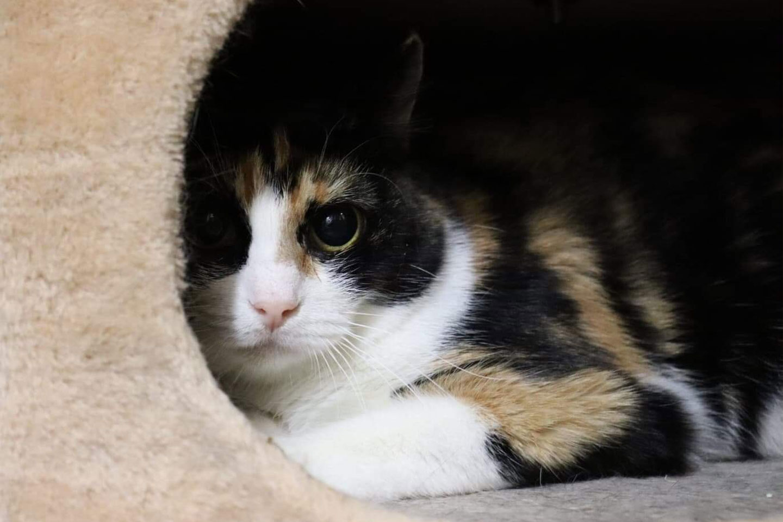 cat-reveenka